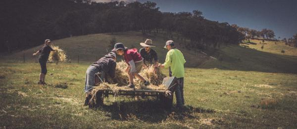 Rural community gathering hay in a field