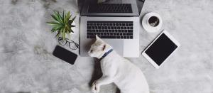 White cat lying across a laptop next to a mobile phone